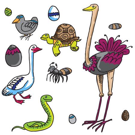 birds and Eggs Vector