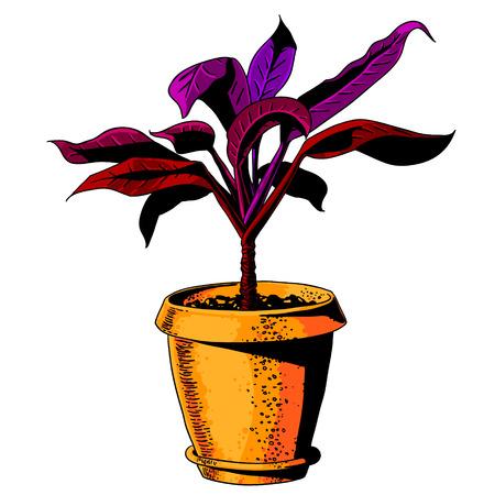 flowerpot: flower in a flowerpot. vector illustration Illustration