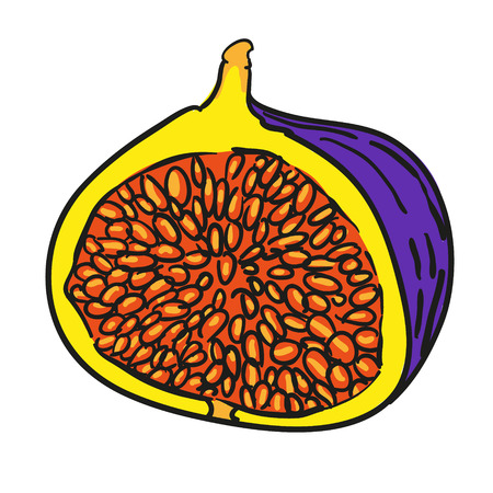 fig: fig - hand drawn fruits isolated vector Illustration