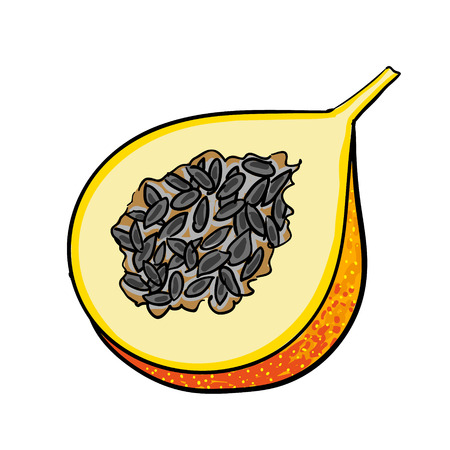 passion fruit: passion - fruit hand drawn fruits isolated vector Illustration