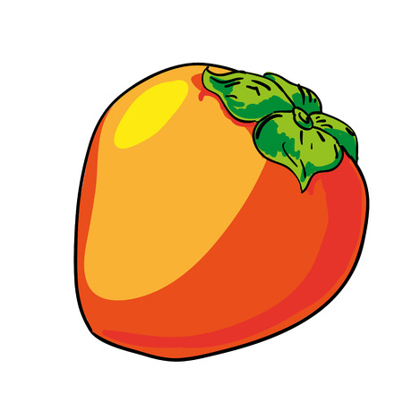 persimmon: persimmon - hand drawn fruits isolated vector