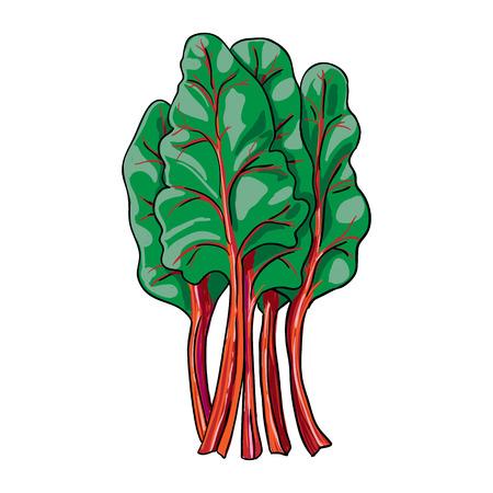 hand getekend plantaardige geïsoleerde vector snijbiet