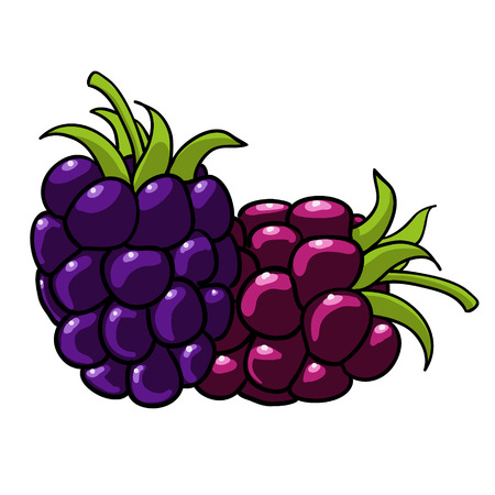 blackberry: hand drawn fruits isolated vector blackberry