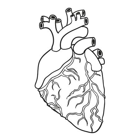 vas: Isolated Human heart. Hand-drawn Vector illustration.