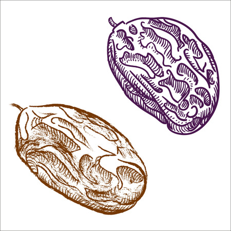 fruitcake: Raisins hand drawn illustration Isolated Illustration