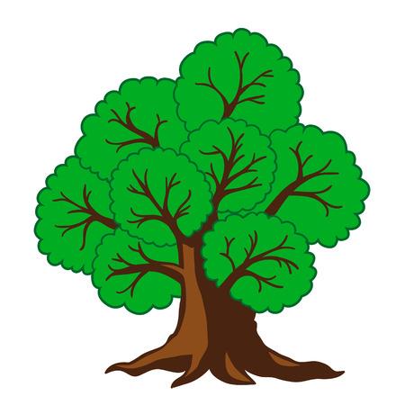 big tree: Tree big oak Illustration