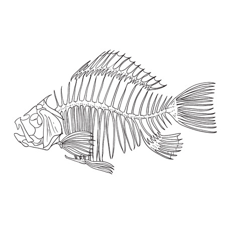 skeleton fish sketch cartoon doodle. vector illustration