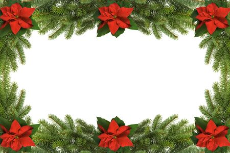 poinsettia: Christmas frame made of poinsettia and spruce Stock Photo