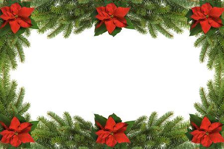 flor de pascua: Marco de Navidad de Euphorbia pulcherrima y abeto  Foto de archivo