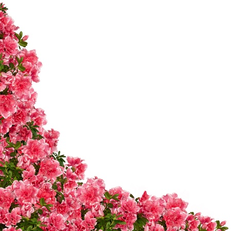Frame of azalea flowers isolated on white  photo