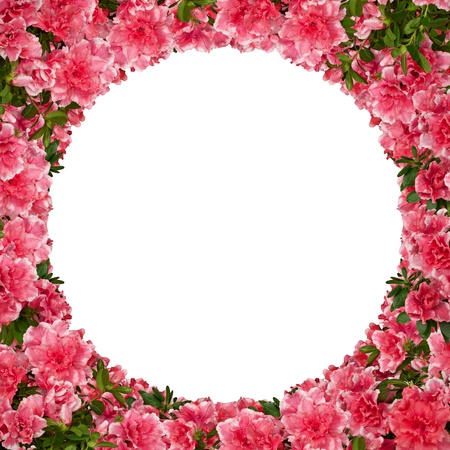 azalea: Round floral frame with azalea flowers against white  Stock Photo