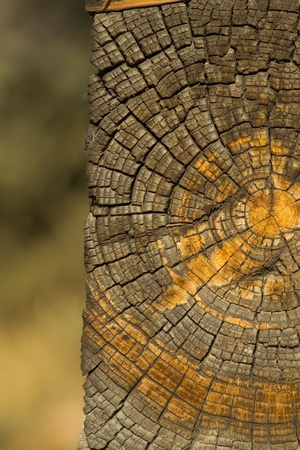 Old log end with growth rings and cahracter from log cabin photo