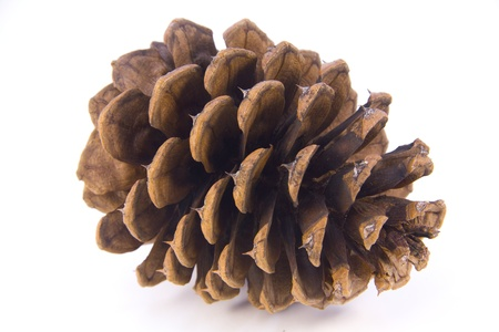 pomme de pin: Close up of a pine cone showing detail and texture