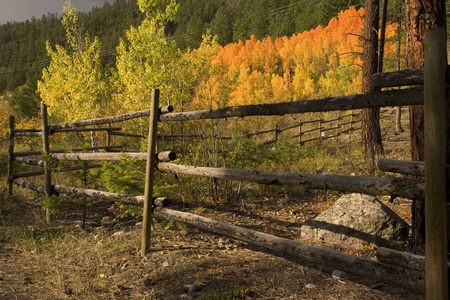 fenceline: Artistic view of fenceline with fall colours behind