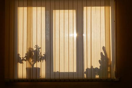 Shadows silhouette on the venetian blinds. Window backlight