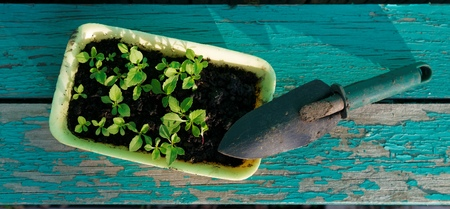Little Green Sprouts and Small Gardening Tool on Shabby Wooden Background