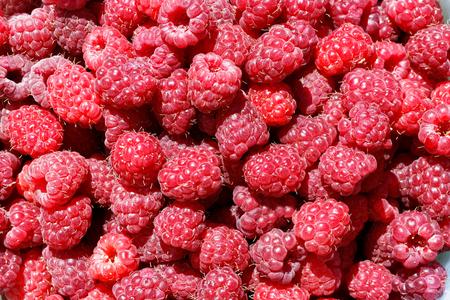 dozens: Dozens of bright red, fresh raspberries as background