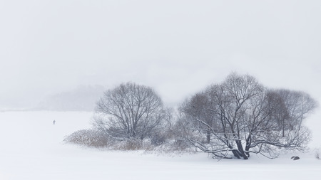 whiteness: Winter background. Trees surrounded by winter pure whiteness.