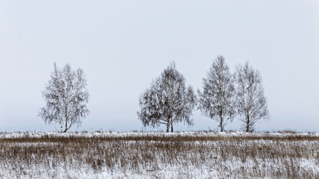Winter landscape with a bare trees against a white sky background.