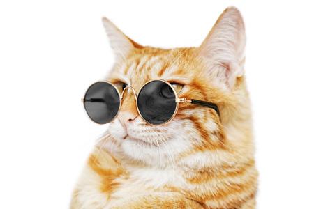 Close-upportret van grappige gemberkat die zonnebril draagt die op wit wordt geïsoleerd. Ondiepe focus.