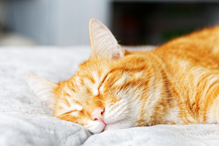 A ginger cat lays on the bed and sleeps with closed eyes. Shallow focus. Stock Photo