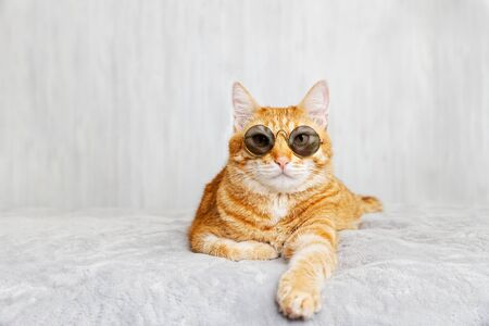 Closeup portrait of funny red cat wearing sunglasses, lying on a bed and looking straight ahead directly into the camera against white blurred background. Shallow focus. Copyspace. Imagens