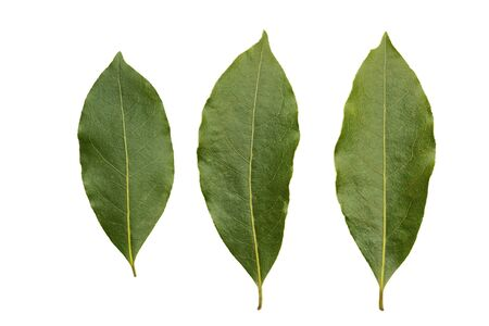 Three bay leaves isolated on white Imagens