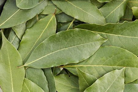 Closeup heap of green bay leaves. Nature background.