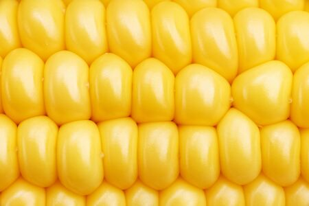 Closeup fragment of ripe ear of corn Imagens