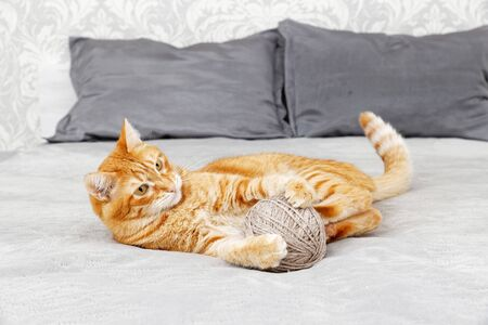 Orange cat playing with a ball of yarn lying on the bed. Shallow focus, blurred background. 스톡 콘텐츠
