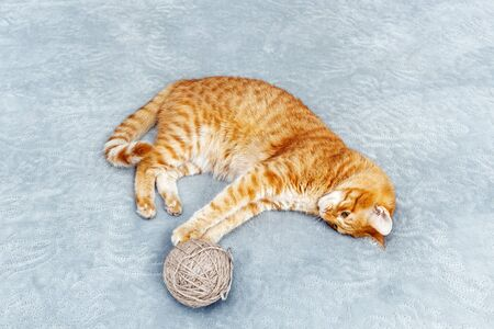 Orange cat playing with a ball of yarn lying on the bed. Shallow focus. 스톡 콘텐츠