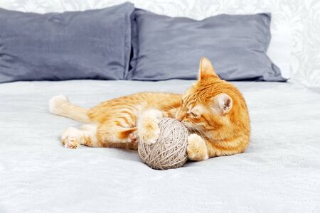 Orange cat playing with a ball of yarn lying on the bed. Shallow focus, blurred background. Archivio Fotografico