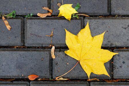 Closeup fallen autumn foliage on the wet sidewalk. Top view.