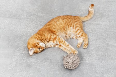 Orange cat playing with a ball of yarn lying on the bed. Shallow focus. Stock fotó