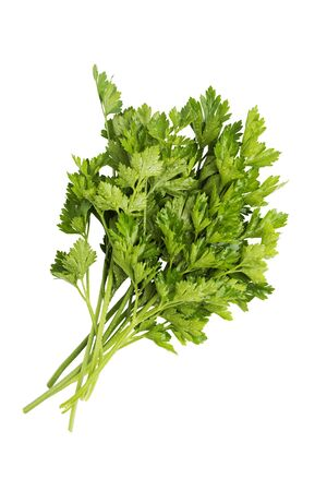 Closeup bunch of fresh raw parsley with drops of water isolated on white