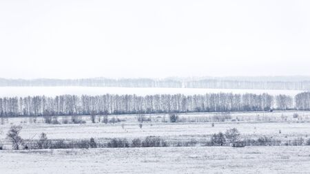 Winter landscape. A rows of bare trees against a white snow and white winter sky background. Copyspace.