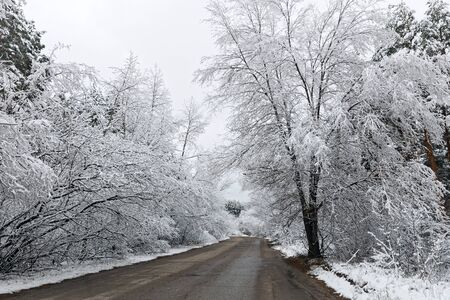 Winter countryside road among snowy trees
