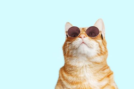 Closeup portrait of funny ginger cat wearing sunglasses and looking up isolated on light cyan. Copyspace. 写真素材