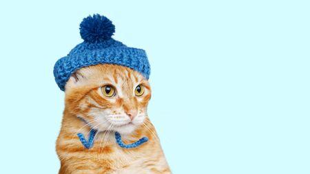 Nahaufnahmeporträt der lustigen roten Katze in einer blauen Strickmütze mit einem Pompon lokalisiert auf hellem Cyan. Exemplar.