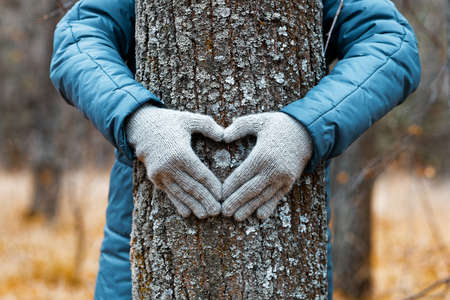 Womans hands is hugging the tree and make a heart sign on tree trunk against autumn nature blurred background