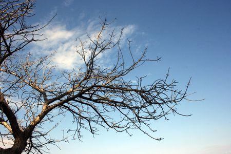 Dead Tree Against Sky