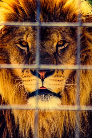 imprisoned: Imprisoned King