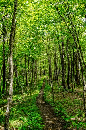 appalachian trail: The Appalachian Trail in Spring Stock Photo
