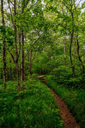 appalachian: Appalachian Trail in the Spring Stock Photo