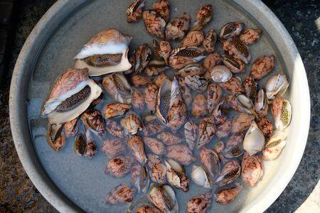 Vietnam Phu Quoc  Duong Dong Market - mussels