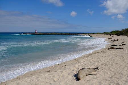 Ecuador Galapagos Islands - San Cristobal Island Punta Carola beach with Seals and Lighthouse Faro Punta Carola 免版税图像