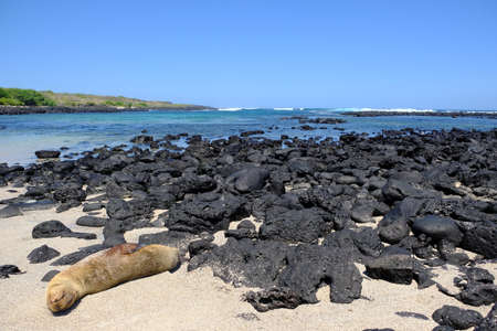 Ecuador Galapagos Islands - San Cristobal Island Scenic beach Playa Loberia with a sleeping Seal