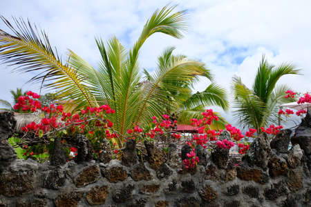 Ecuador Galapagos Islands - Santa Cruz Island Colourful Red Bougainvillea 免版税图像