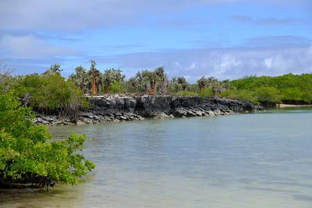 Ecuador Galapagos Islands - Santa Cruz Island Tortuga Laguna coast with Cactus trees