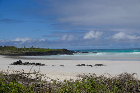 Ecuador Galapagos Islands - Santa Cruz Island Coastline Galapagos Beach at Tortuga Bay 免版税图像